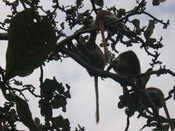 Monkeys Above Us